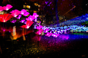 'On the Wings of Freedom' installation @ Amsterdam Light Festival